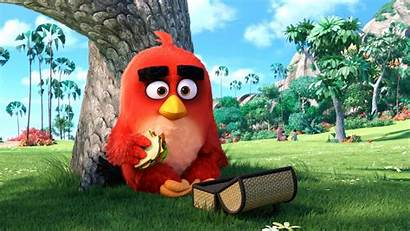 Angry Birds Character Main Wallpapers Animated Movies