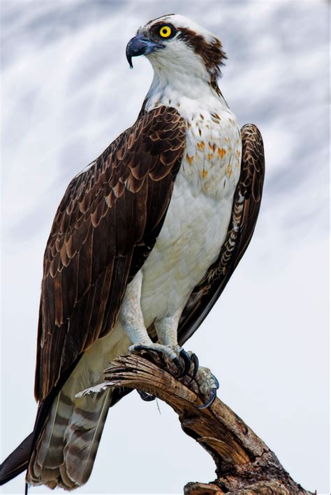 Images Of Osprey Island Conservancy