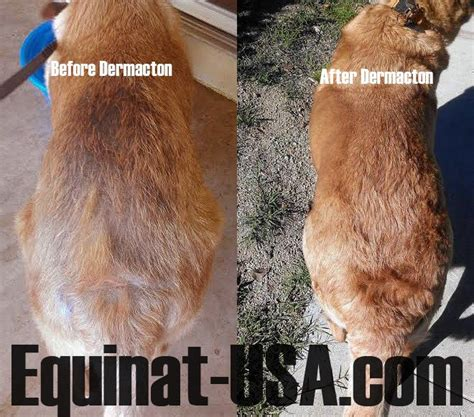 Dermacton Reviews   Dog skin problem, Dog skin, Itchy dog