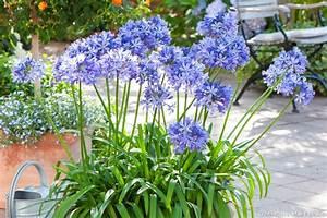 Jardiniere Fleurie Plein Soleil : 5 jardini res longue dur e d tente jardin ~ Melissatoandfro.com Idées de Décoration