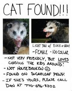 found a cat page 1 ar15