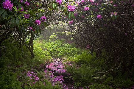 Ben Greenberg Photography Rhododendron at Grayson ...