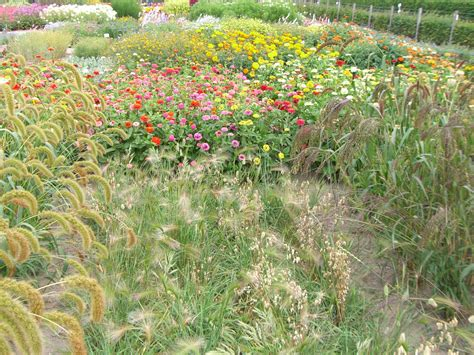 Garten Und Landschaftsbau Lünen by Baumschule L 252 Nen Robert Dellwig Garten Landschaftsbau