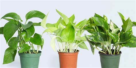 10 Best Indoor Plants For Your House