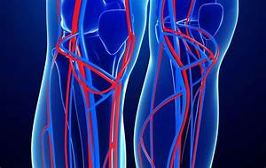 Superficial Veins Vs Deep Veins