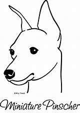 Pinscher Min Miniature Doberman Mini Dog Pins Pincher Dogs Pinchers Drawings Horse Flickr Puppy Friesian Coloring Pages Miniatures Template Tattoo sketch template