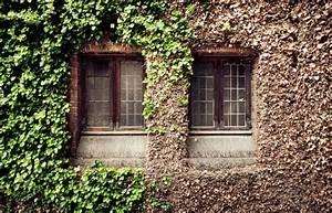 Efeu Als Zimmerpflanze : efeu retten so beleben sie ihn wieder ~ Indierocktalk.com Haus und Dekorationen