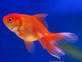 conseils de nourriture poisson aquarium aux paniers rigolos
