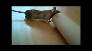 Comment Tuer Un Rat : comment tuer une souris comment attraper une souris sans ~ Mglfilm.com Idées de Décoration