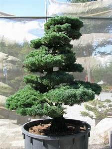 oberpfalz bonsai garten punzmann gmbh menzlhof With garten planen mit bonsai lampe