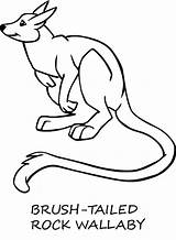 Wallaby Coloring Pages Template Animals Animal Designlooter Sheet Sketch 680px 59kb Rock sketch template