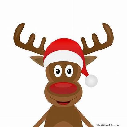 Weihnachten Rudolf Renifer Clipart Schach Reindeer Cliparts