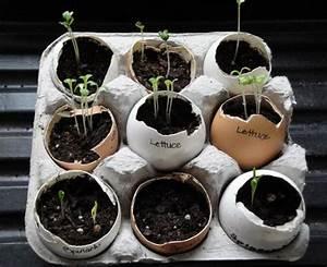 Boite A Oeufs Originale : pour recycler les coquilles et les bo tes d oeufs voici une mani re originale de faire ses semis ~ Nature-et-papiers.com Idées de Décoration
