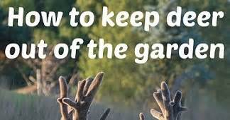 how to keep deer out of your garden how to keep deer out of your garden 14 different ways