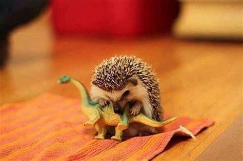 lindos animales exoticos  se pueden tener de mascotas