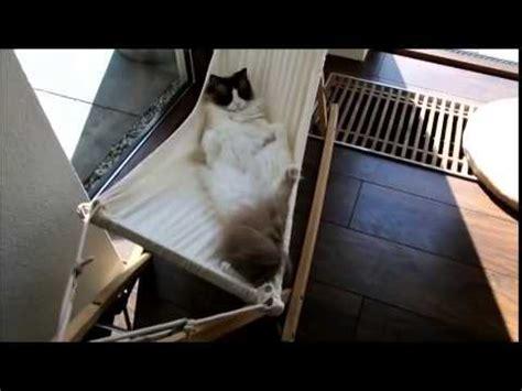 amaca gatto gatto sull amaca