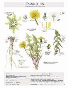 116 Best Plant Anatomy Images On Pinterest