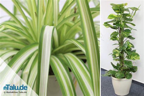 Blühende Zimmerpflanzen Pflegeleicht by Pflegeleichte Zimmerpflanzen 8 Bl 252 Hende Und Gr 252 Npflanzen