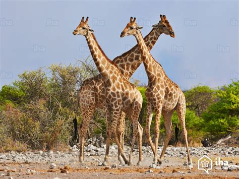 Namibia rentals at the sea for your holidays with IHA direct