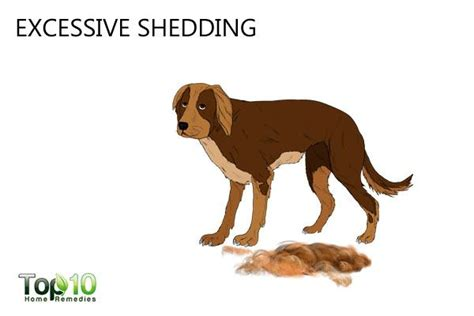 excessive hair shedding in dogs top 10 signs your may be stressed top 10 home remedies