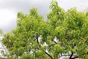 Bäume Schneiden Wann : obstb ume schneiden wann ist der beste zeitpunkt ~ Lizthompson.info Haus und Dekorationen