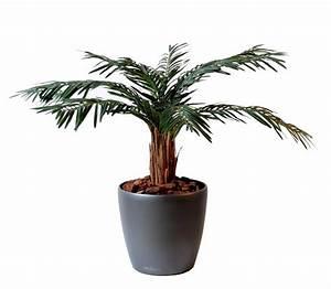Palmier Artificiel Gifi : palmier artificiel cycas palm plante int rieur cm vert ~ Teatrodelosmanantiales.com Idées de Décoration