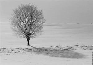 Planisphère Noir Et Blanc : noir et blanc arbre nature fond d 39 cran fond ecran image ~ Melissatoandfro.com Idées de Décoration