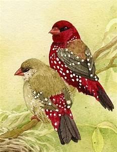 Malen Mit Wasserfarben : v gel mit wasserfarben malen zeichnen pinterest vogel malen und bilder zum zeichnen ~ Orissabook.com Haus und Dekorationen