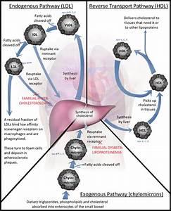 Lipoprotein