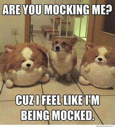 Fat Dog Meme - 1000 images about the dog i want on pinterest boxer mix puppies lab mixes and pug