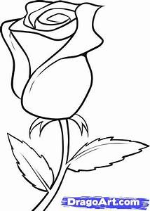 drawing beautiful roses | How to Draw a White Rose, Step ...