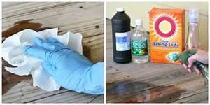 Enlever Odeur Urine Chien : 11 astuces pratiques pour nettoyer et entretenir votre ~ Nature-et-papiers.com Idées de Décoration