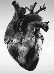 medicine | Tumblr - gif animé #1513917 par Voron777 sur ...