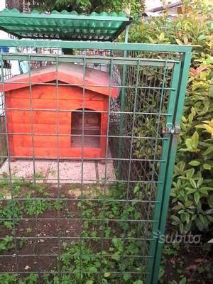 vendo animali da cortile vendesi animali da cortile e da parco prato posot class