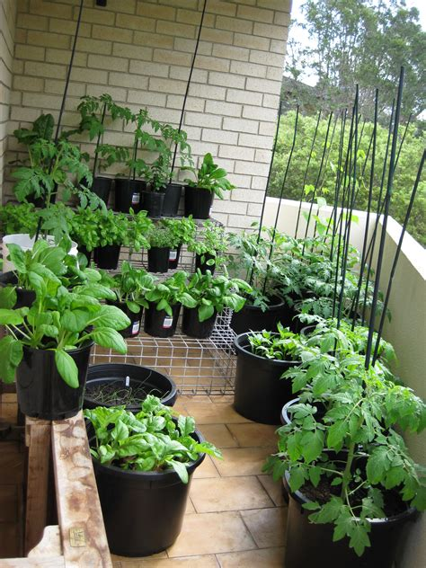 Balcony Kitchen Gardening Ideas For Limited Space  Blog