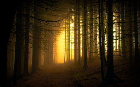 atardecer en el bosque hd fondoswikicom