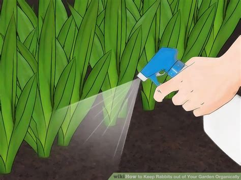 how to keep bunnies out of your garden 3 ways to keep rabbits out of your garden organically