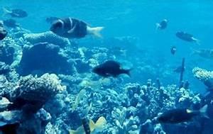 The marine biome  Aquatic