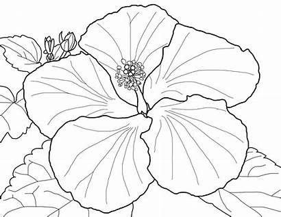 Flower Single Coloring Pages Wealth Printable Spring