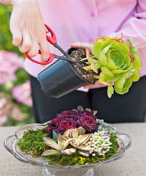 how to make your own succulent display better homes and
