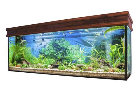 comment enlever les algues dans un aquarium algues et plantes d un aquarium doctissimo
