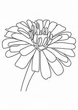 Coloring Flowers Zinnia Lily Daffodil Flower Parentune Printable Child Worksheets Preschoolers sketch template