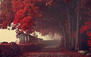 Wallpaper, Sunlight, Trees, Landscape, Forest, Fall