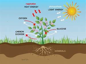 How Does Photosynthesis In A Plant Take Place