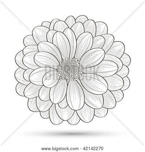 hand drawn flower chrysanthemum element  design