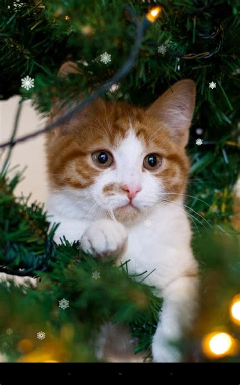 Xmas Cat Live Wallpaper  Android Apps On Google Play
