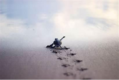Turtle Sea Running Shore Safety Turtles Wallpapersafari