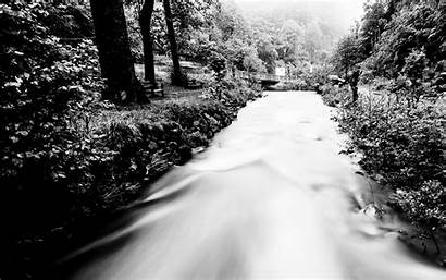 Stream Forest River Widescreen Trees Resolutions Sun