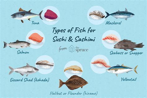 choosing fish  seafood  sushi  sashimi