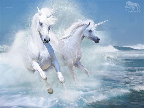 horses wallpapers living  pyrgos